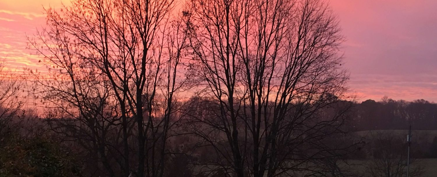 Mountains and bare trees with a pink sky in the background